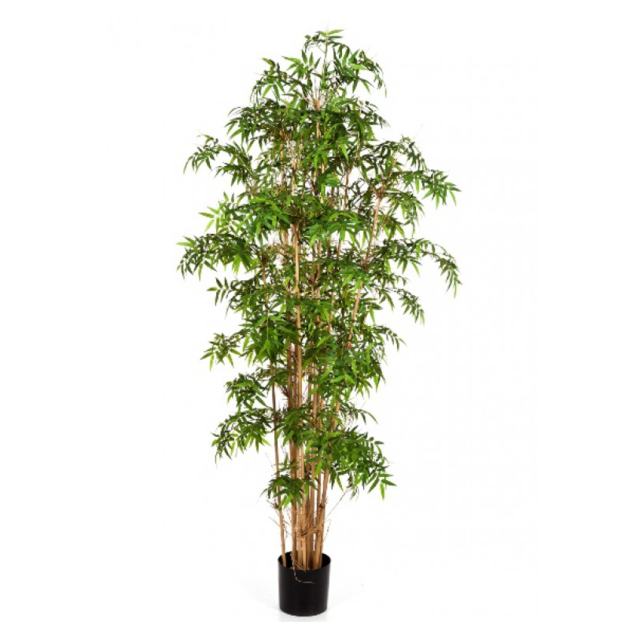 Bamboo, Japans Deluxe, 140cm, 1