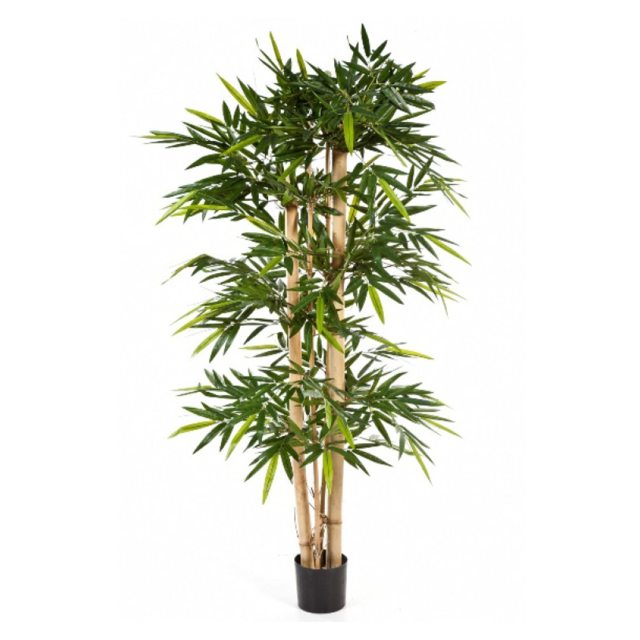 Bamboo, New Giant, 150cm 1
